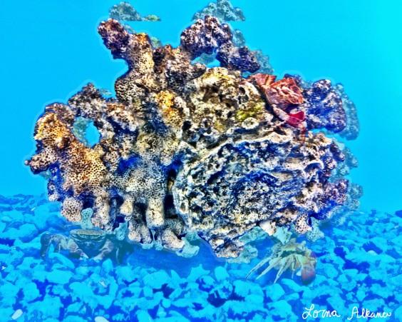 coral crab 1x20 web sans crabs