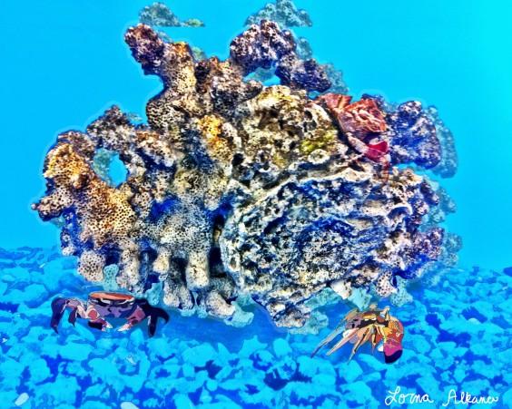 coral crab 1x20 web