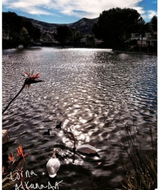 photo of swans in lake at a house in agoura hills