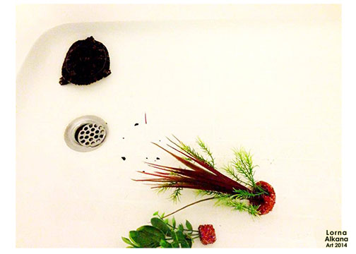 turtle in the bathtub lorna alkana w